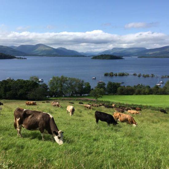 Portnellan Farm